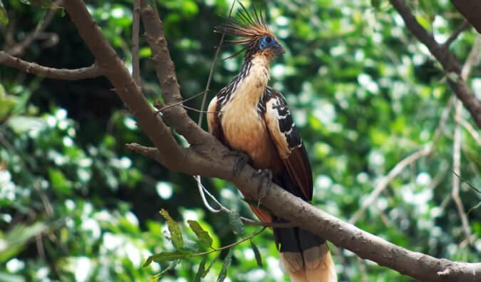 Comment visiter la forêt amazonienne en Bolivie ?