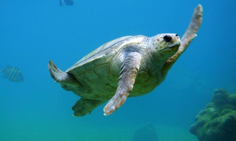 Les meilleurs spots de plongée en Australie